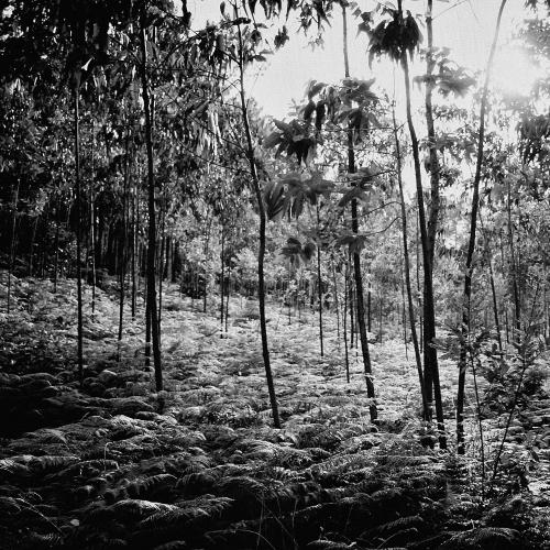 Fotografía Joaquín Puga